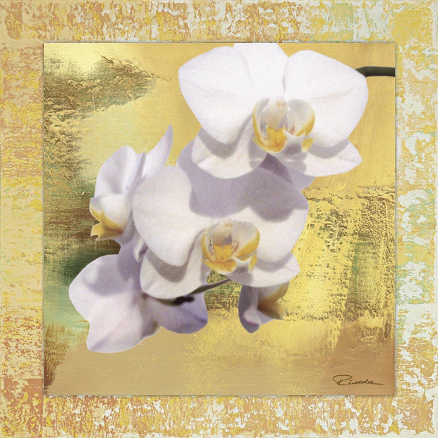 """Home affaire Kunstdruck , weiß, 62,4x62,4cm, """"Riweda: Weiße Orchidee II"""""""