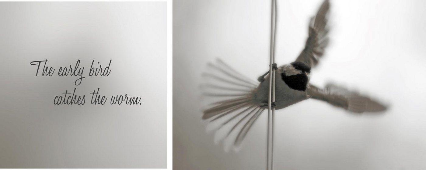 "Leinwandbild , mehrfarbig, 100x40cm, ""Early Bird"","