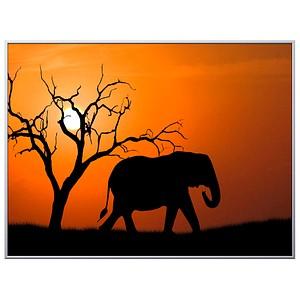 PAPERFLOW Wandbild Elefant