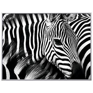 PAPERFLOW Wandbild Zebra